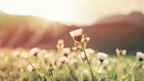 """Zacznij od nowa na wiosnę w """"Organic Farma Zdrowia"""""""
